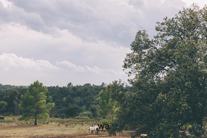 Wedding's Art - Casament Mas Oliveres 036