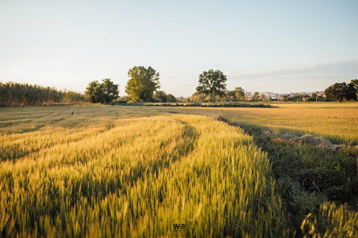 Preboda camp blat 20